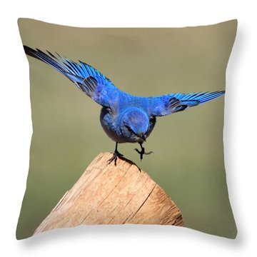 Showing Off Throw Pillow by Shane Bechler