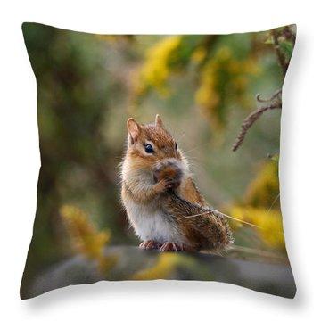 Shy Little Chipmunk Throw Pillow