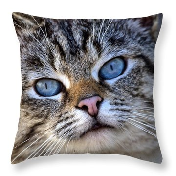 Siamese Feral Cat Throw Pillow by Chriss Pagani