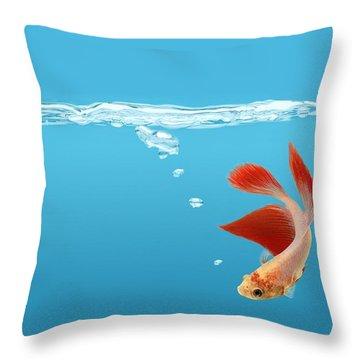 Siamese Fighting Fish Betta Splendens Throw Pillow by Don Hammond