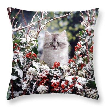 Silver Tabby Kitten Throw Pillow by Jane Burton