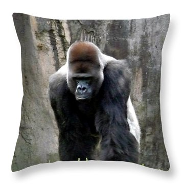 Throw Pillow featuring the photograph Silverback by Jo Sheehan