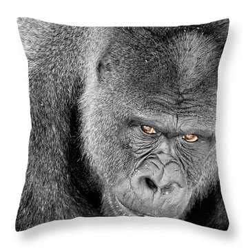 Silverback Staredown Throw Pillow by Jason Politte
