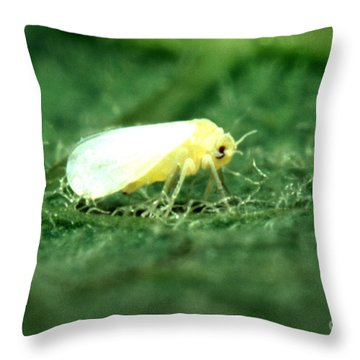Silverleaf Whitefly Throw Pillow by Science Source