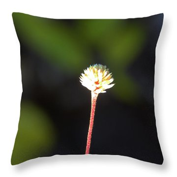 Throw Pillow featuring the photograph Simplicity by Kerri Ligatich