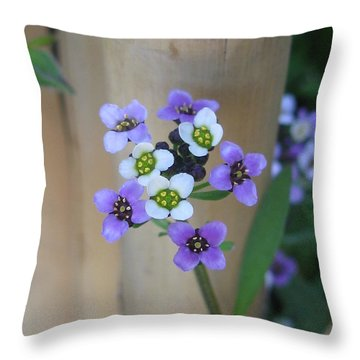 Throw Pillow featuring the photograph Sincere by Tina Marie