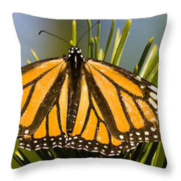 Single Monarch Butterfly Throw Pillow by Darcy Michaelchuk