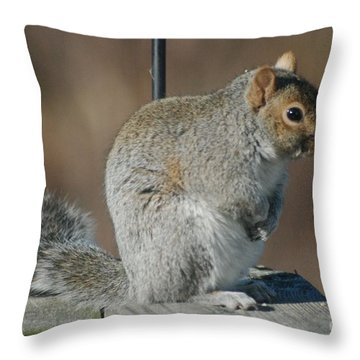 Throw Pillow featuring the photograph Sittin Pretty by Mark McReynolds