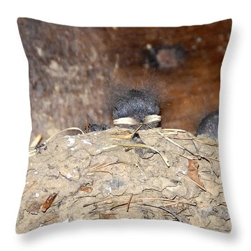 Sleeping Barn Swallows Throw Pillow by David Lee Thompson