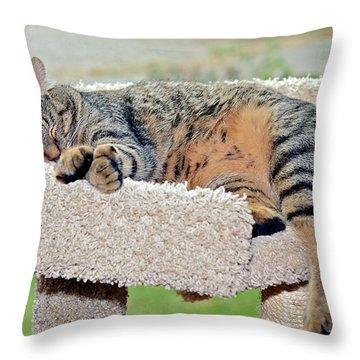 Sleeping Cat Throw Pillow by Susan Leggett
