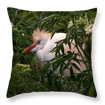 Sleepy Egret In Elderberry Throw Pillow