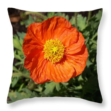 Small Orange Poppy Throw Pillow