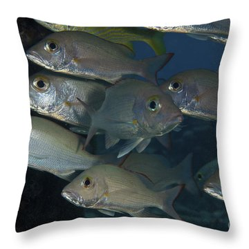 Small School Of Mahogany Schnapper Throw Pillow by Terry Moore