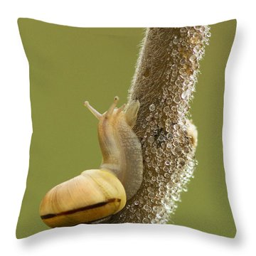 Snail In Dew Throw Pillow by Mircea Costina Photography