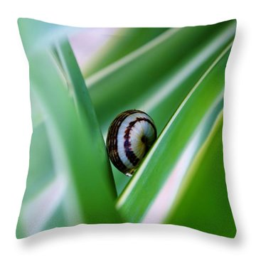 Throw Pillow featuring the photograph Snail On Yuca Leaf by Werner Lehmann
