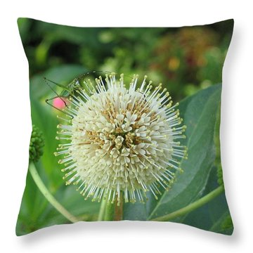 Throw Pillow featuring the photograph Snakeroot Rider by Mark Robbins