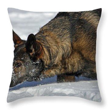 Snow Dog Throw Pillow by Karol Livote