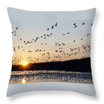 Snow Geese At Sunrise Throw Pillow