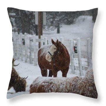 Snow Horse Throw Pillow by Linda Jackson