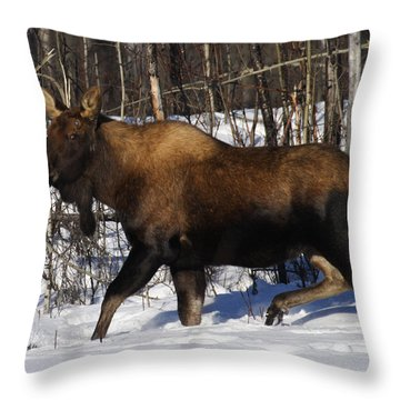 Throw Pillow featuring the photograph Snow Moose by Doug Lloyd