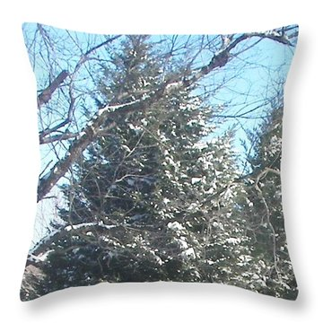 Throw Pillow featuring the photograph Snow Sprinkled Pine by Pamela Hyde Wilson