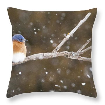 Snowy Bluebird Throw Pillow