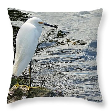Snowy Egret 2 Throw Pillow by Joe Faherty