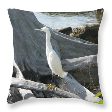 Throw Pillow featuring the photograph Snowy Egret by Laurel Best