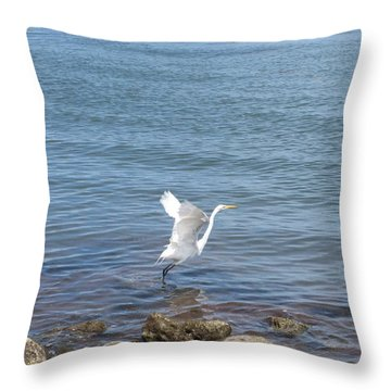 Throw Pillow featuring the photograph Snowy Egret by Marilyn Wilson
