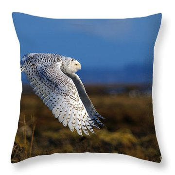 Snowy Owl 1b Throw Pillow