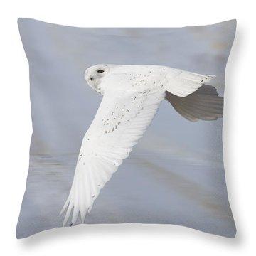 Snowy Owl In Flight In Saskatchewan Canada Throw Pillow by Mark Duffy