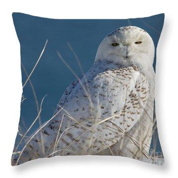 Snowy Owl Profile Throw Pillow