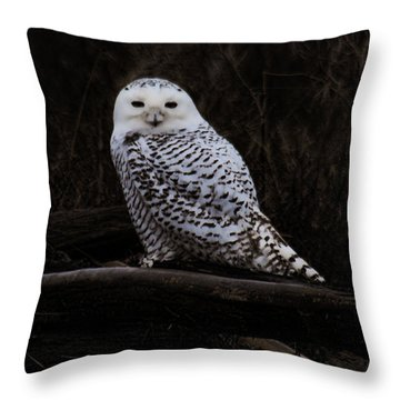Snowy Owl Two Throw Pillow