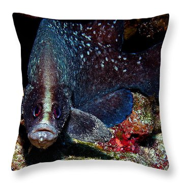 Soapfish Throw Pillow