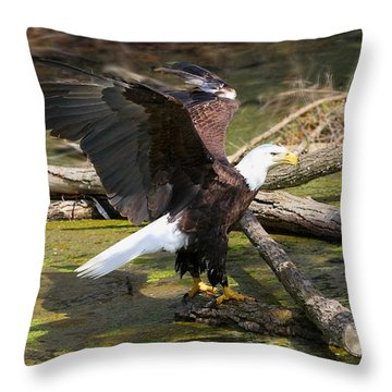 Throw Pillow featuring the photograph Soaring Eagle by Elizabeth Winter