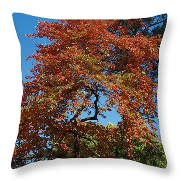 Throw Pillow featuring the photograph Soaring Fall by Joseph Yarbrough