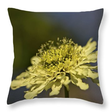 Soft Yellow. Throw Pillow by Clare Bambers