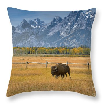 Solitary Moments Throw Pillow by Sandra Bronstein