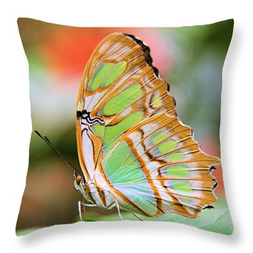 Solitude On A Summer Morning Throw Pillow
