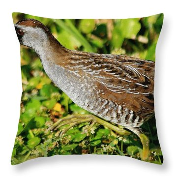 Sora In The Open Throw Pillow