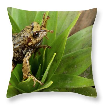 Southern Frog Pristimantis Sp, Newly Throw Pillow by Pete Oxford