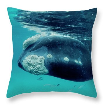 Southern Right Whale Eubalaena Throw Pillow by Mike Parry