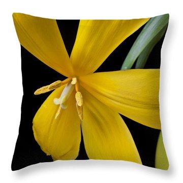 Spent Tulip Throw Pillow by Garry Gay