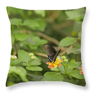 Throw Pillow featuring the photograph Spicebush Swallowtail Butterfly On Lantana Shrub Verbena by Marianne Campolongo