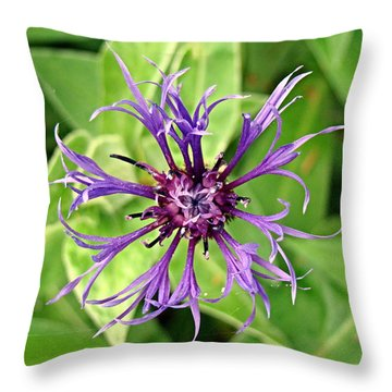 Throw Pillow featuring the photograph Spider Flower by Nick Kloepping