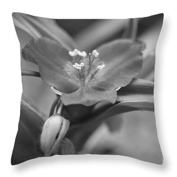 Spiderwort In Black Throw Pillow by Brooke Roby