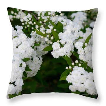 Throw Pillow featuring the photograph Spirea Blooms by Maria Urso