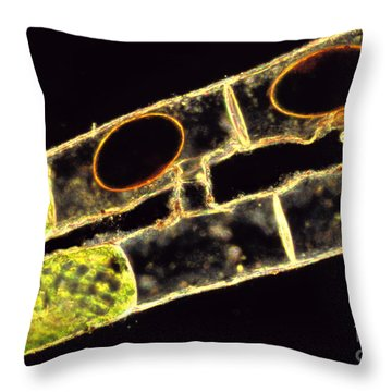 Spirogyra Zygospores Throw Pillow by M. I. Walker