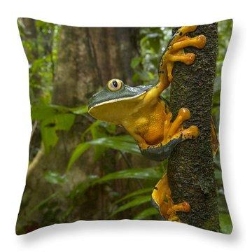 Splendid Leaf Frog  Costa Rica Throw Pillow by Piotr Naskrecki