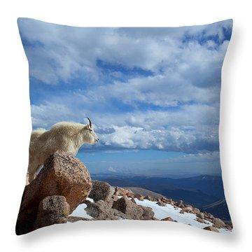 Splendiforous Throw Pillow by Jim Garrison